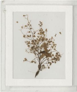 Ten dried plant specimens