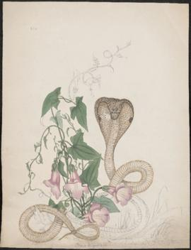 Cobra and pink flowers