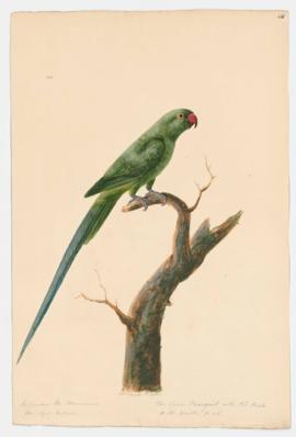 The Green Perroquet with Red Beak